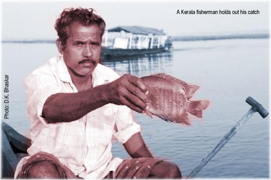 Amidst the Kerala Canals