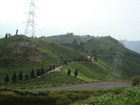 Delectable Darjeeling