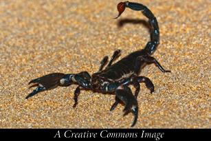 The Scorpion's Diet