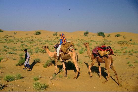 Camel Safari: Call of the desert