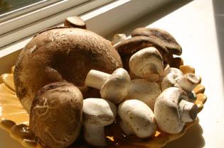 Mushrooms: Fantastic Fungi