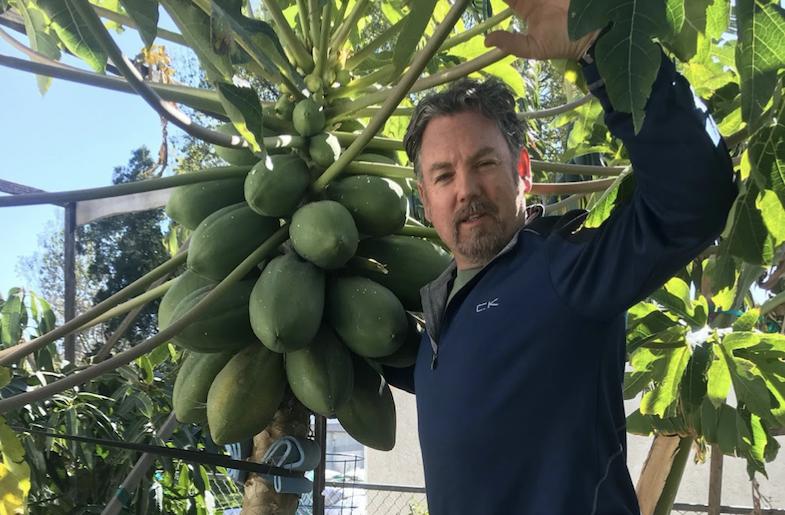 Growing Tropical Fruits in California?