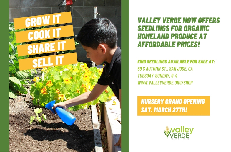 Grow, Eat, Share and Sell – Local Families Get New Resource  for Heritage Seedlings