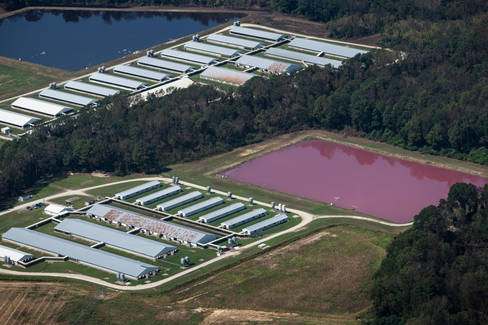 Aerial view of CAFO barns and manure lagoons in North Carolina (Image by Jo-Anne McArthur from We Animals)