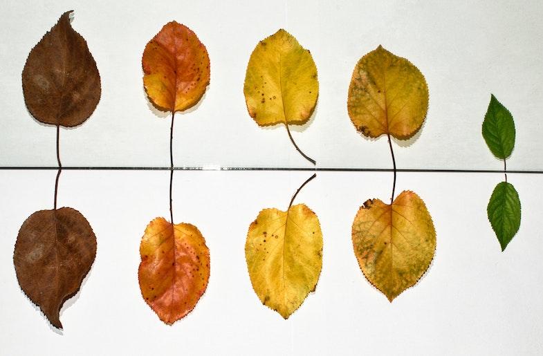 Fading leaves signify Dementia (Image by Tolga Ulkan)